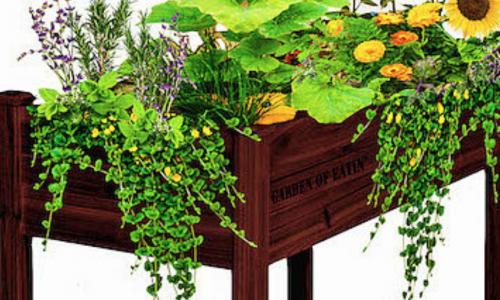 The Garden of Eatin' – Valerie and Zak Furey